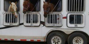 horse trailer service